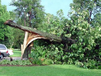 After The Storm What To Do With Damaged Trees North