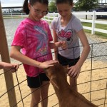 Learning about cows, while on the farm.