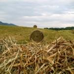 Brasstown Hay