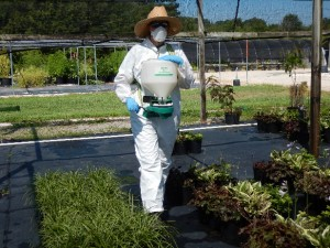 Cover photo for Field Days -- Cost-Effective Weed Management in Container Nurseries