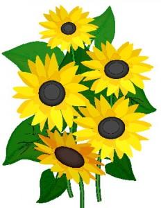 Sunflower-clipart-2-clipartion-com-2