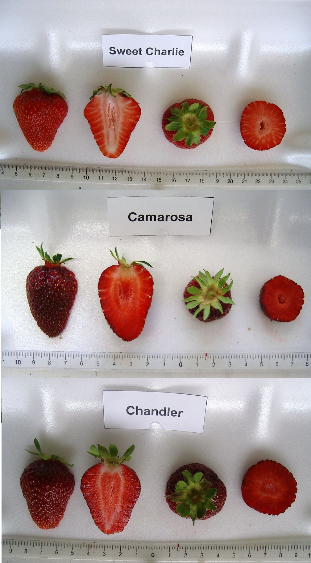 Common varieties in NC. Photo: Aurélie Petit (http://www.bordeaux.inra.fr/)