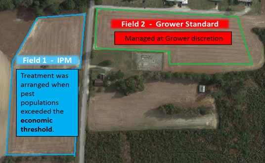 Paired fields were scouted weekly at all grower sites.