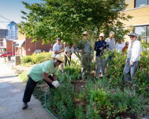 Master Gardeners working in the demo garden