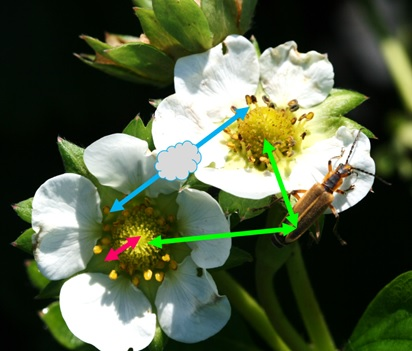Different modes of pollination on each flower. Photo: Jeremy Slone