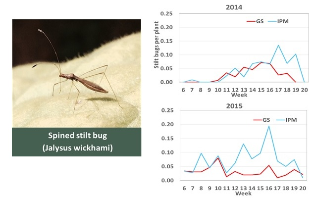 Stilt bug populations over the growing season. Photo: Jeremy Slone