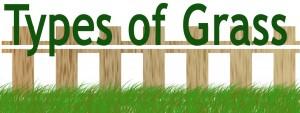 webtypesofgrass