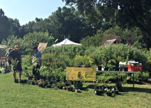 2017 native plant festival2