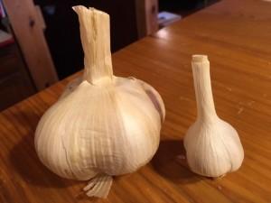 Hard and soft neck garlic.