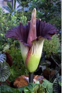 Cover photo for Ever Seen a 5 Foot Tall Flower? Now You Can
