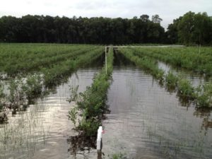 Cover photo for Guidance for Industry: Evaluating the Safety of Flood-Affected Food Crops for Human Consumption