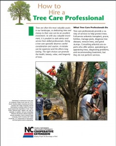 Cover photo for Tips for Hiring a Tree Care Expert