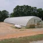 Greenhouse in eastern North Carolina