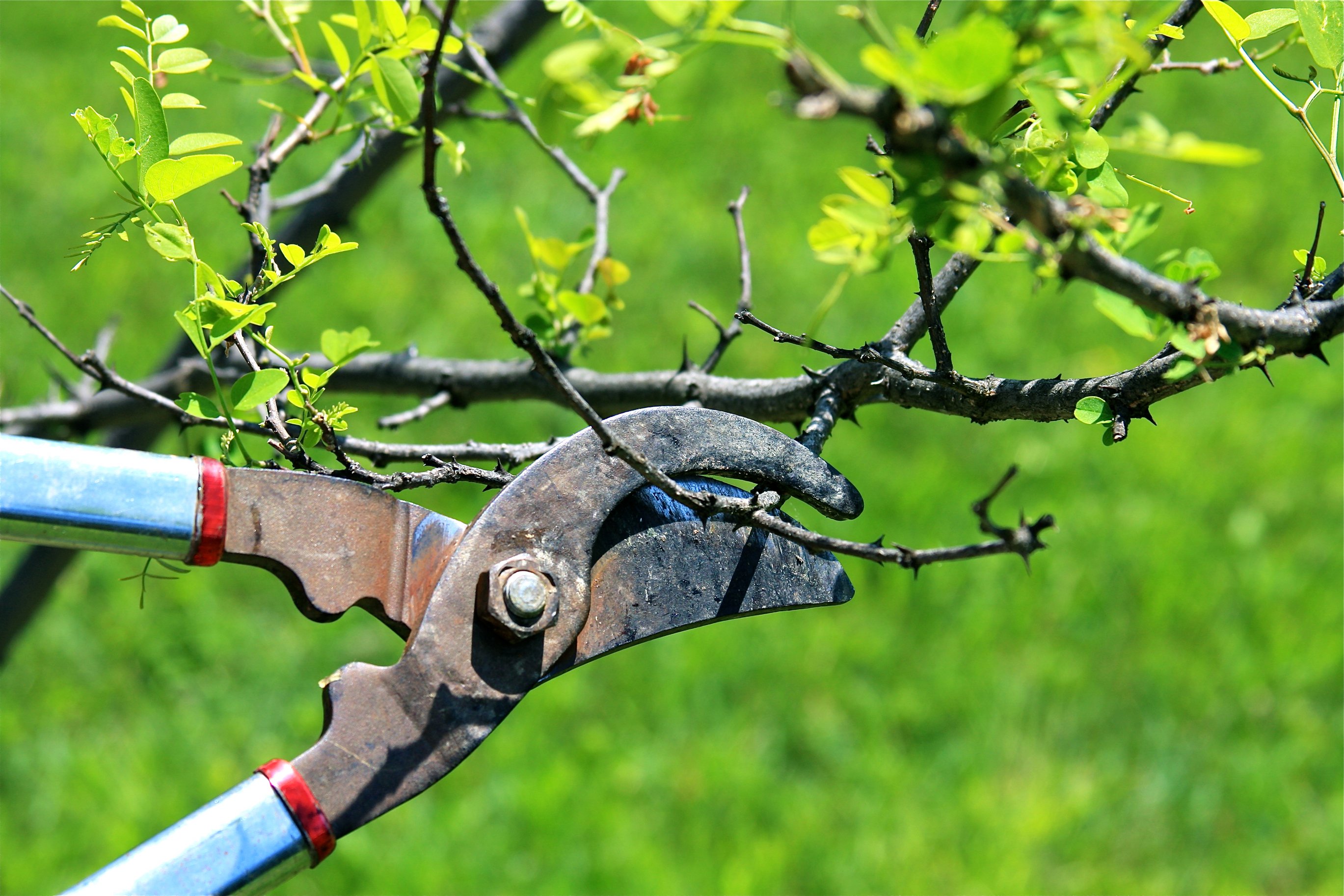 Image result for pruning a tree
