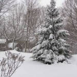 Snow-scene-thumb-500x375