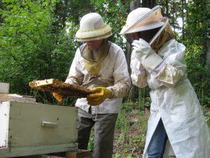 beekeepers looking for queen bee.