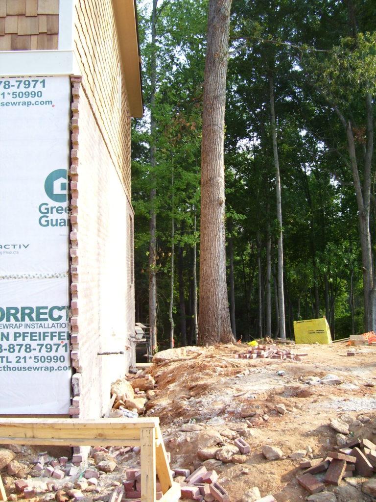 construction damaged tree