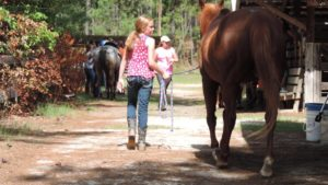 Cover photo for NC Horse Council Scholarship Information
