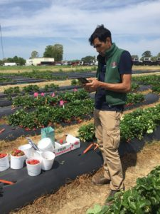 Cover photo for New Research Project on Strawberry Anthracnose