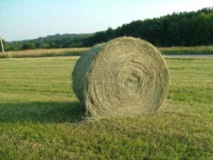 Cover photo for 2020 Hay Directory *Updated 2.13.20