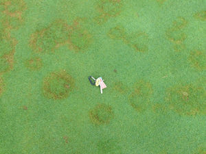 Cover photo for Got Creeping Bentgrass Problems?