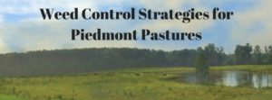 Cover photo for Weed Control Strategies for Piedmont Pastures