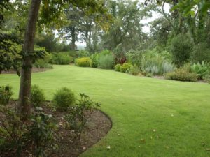 green lawn and border plantings
