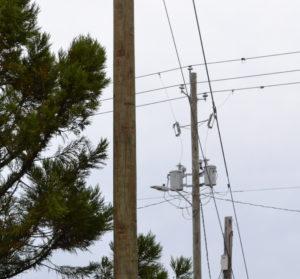 Power pole with tree limbs