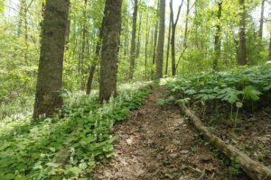 Cover photo for More Opportunities to Learn About Growing Medicinal Herbs and Forest Farming