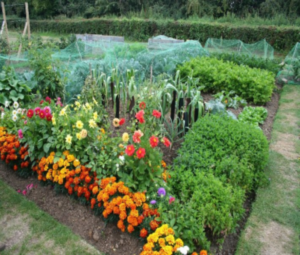 Cover photo for Lunch Time Garden Tips