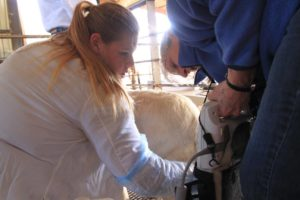 Cover photo for Nance Family 4-H Meat Goat Leadership Institute
