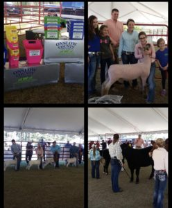 Cover photo for 2018 Onslow County Livestock Showdown