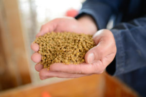 animal feed held in cupped hands