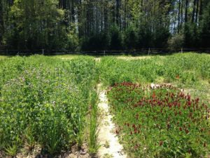Cover photo for Biomass Production With Legume and Small Grain Cover Crop Mixtures in North Carolina: Research Summary