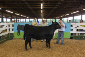 Cover photo for Catawba Valley Youth Beef Expo