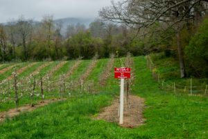 Cover photo for WNC Orchard Insect Pest Populations