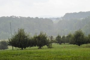 Cover photo for WNC Orchard Insect Populations for May 22, 2018