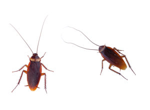 Cover photo for Creating a Healthy Home Step 5:  Get Rid of Pests