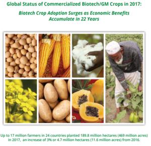 Cover photo for ISAAA Releases Report on Global Adoption of Biotech Crops