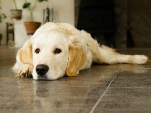 Dog laying on a linoleum floor inside a house
