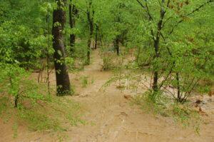 Cover photo for Big Rains, Big Floods