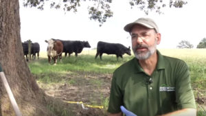 Cover photo for Picking Up After the Storm on Pasture-Based Livestock Farms