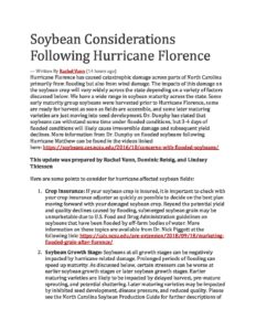 Cover photo for Soybean Considerations Following Hurricane Florence