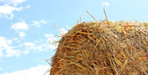 Cover photo for Hay Donation Website