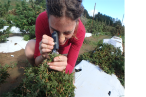 Cover photo for Meet the NC State University Hemp Researchers