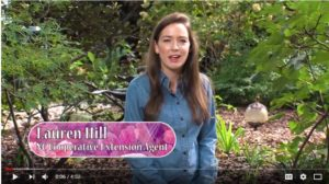 Cover photo for Welcome Lauren Hill to Successful Gardener