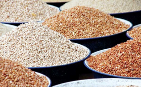 Cover photo for Nigeria: Despite Controversy, Nigeria 'Approves' First Genetically Modified Crop
