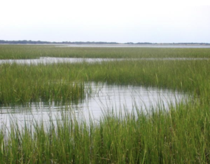 Cover photo for Timely Article on Wetland Value Published by NC State's Burchell and Hunt