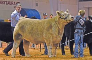Cover photo for 2019 N.C. State Fair Market Steer Tag-in Dates & Locations
