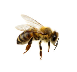 Cover photo for 4-H Beekeeping Club Interest Meeting